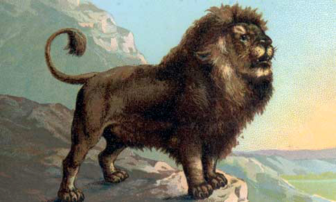 AS lion clipart
